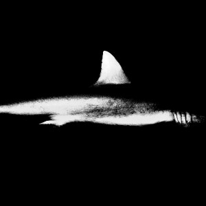 Chris Leidy, Silhouette, 2012. Offshore night dive shot in black and white of a Galapagos shark in French Polynesia. Courtesy of the artist.