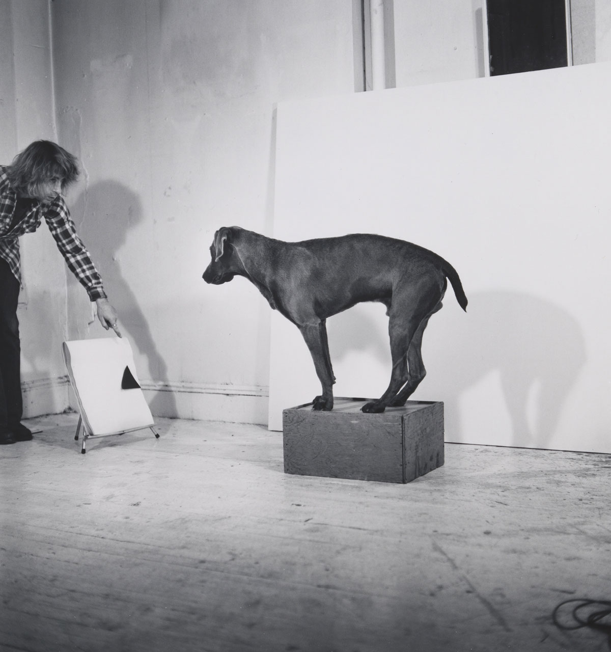 Before On After William Wegman and California Conceptualism